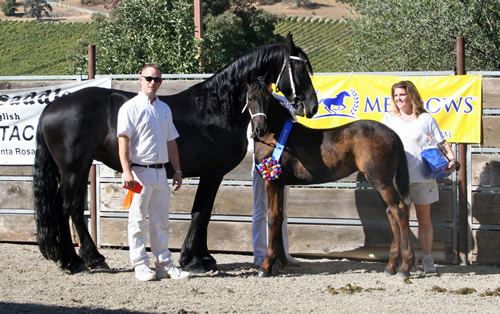 Trude - Ster and Carre RS - 1st Premie Champion Filly!