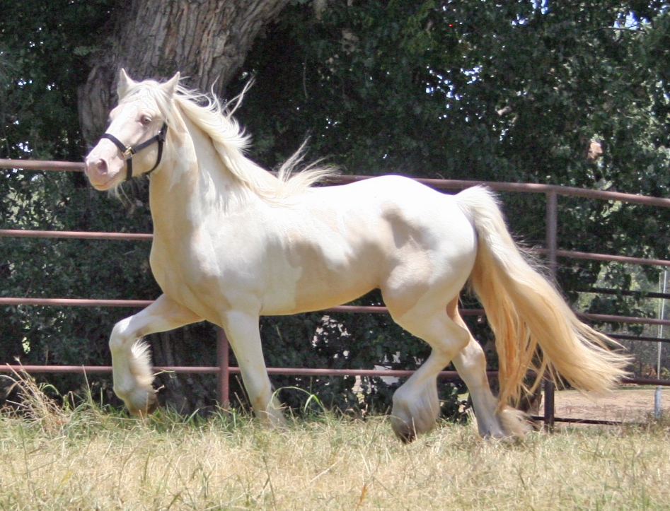 Horse breeds with a z pictures
